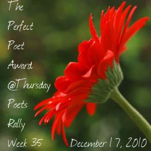 Perfect Poet Award - Poets Rally Week 35